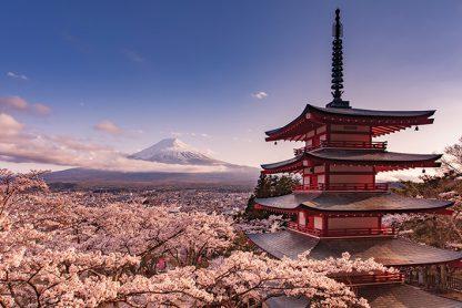 Mount Fuji Blossom